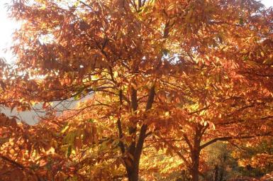 Rutas otoño